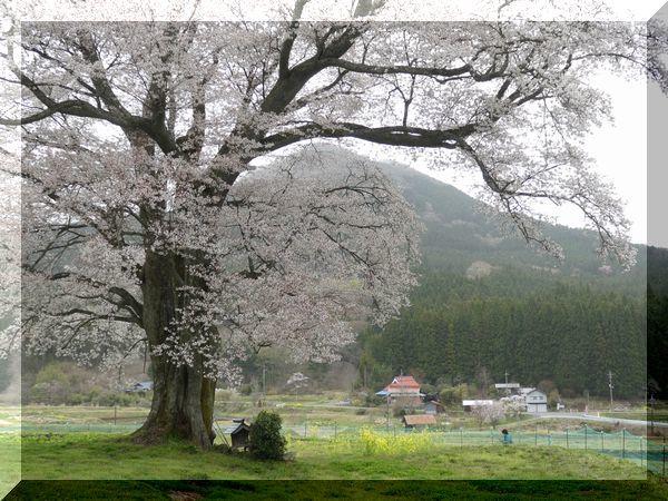 山桜_e0365880_21303889.jpg