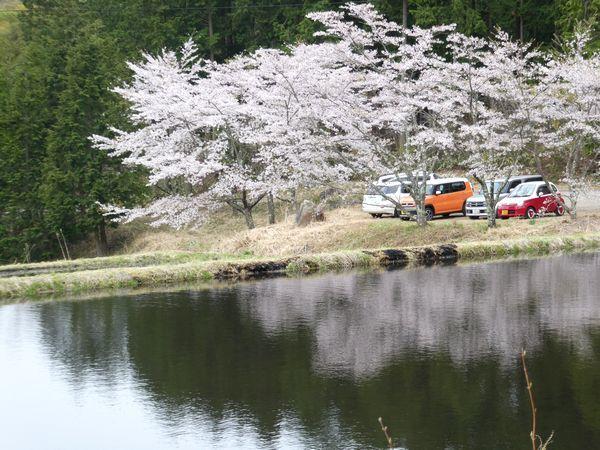 山桜_e0365880_21314007.jpg
