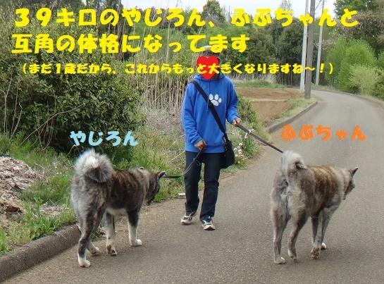 f0121712_13143268.jpg
