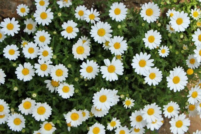 庭の花々 続編_d0150720_21223322.jpg