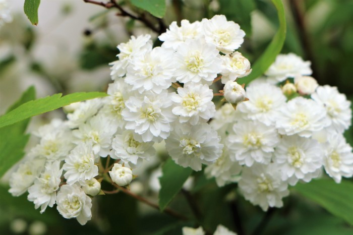 庭の花々 続編_d0150720_21235805.jpg
