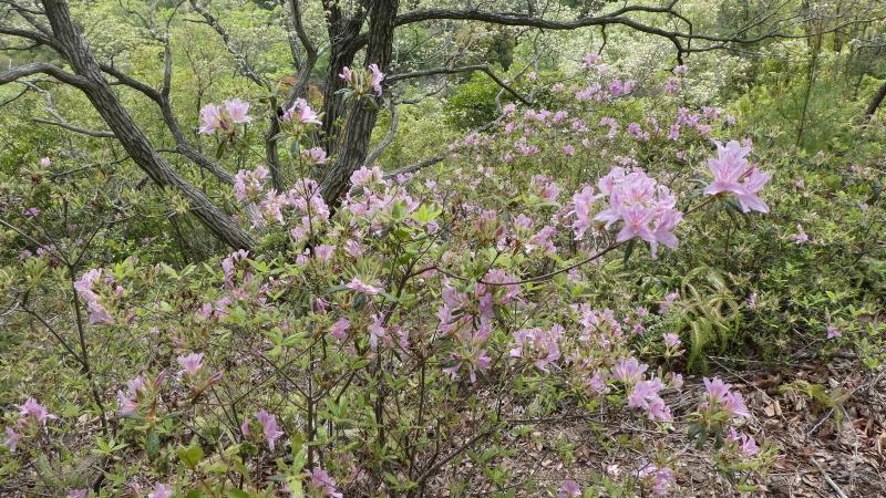 孝子の森の春_c0108460_00121324.jpg