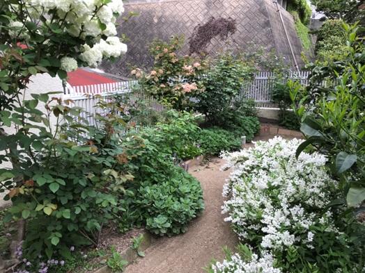 白い花が咲いてる~♪_b0214473_17372231.jpg