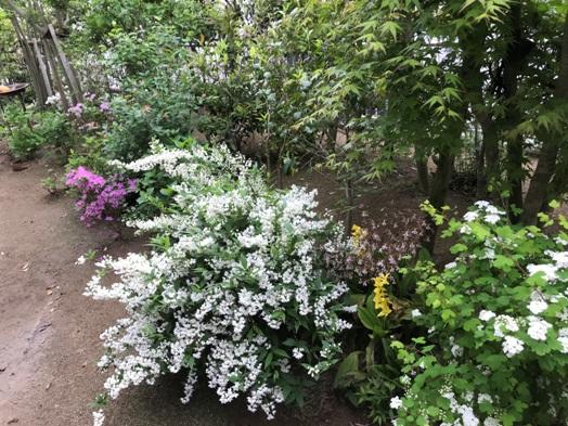 白い花が咲いてる~♪_b0214473_1738365.jpg