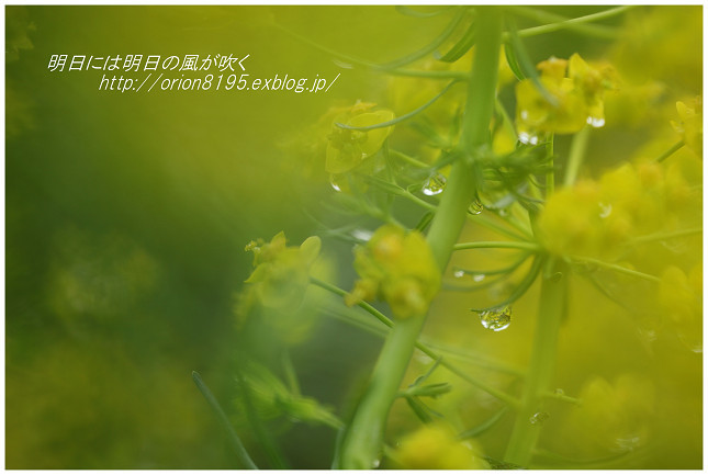 f0361079_21003735.jpg
