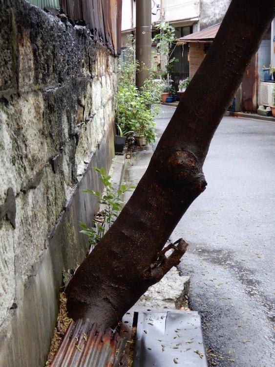すき間樹木_c0156717_14563227.jpg