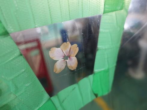 桜の花びら_d0085634_13344692.jpg