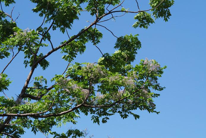 墾丁の植物 -Ⅱ_d0149245_18530086.jpg