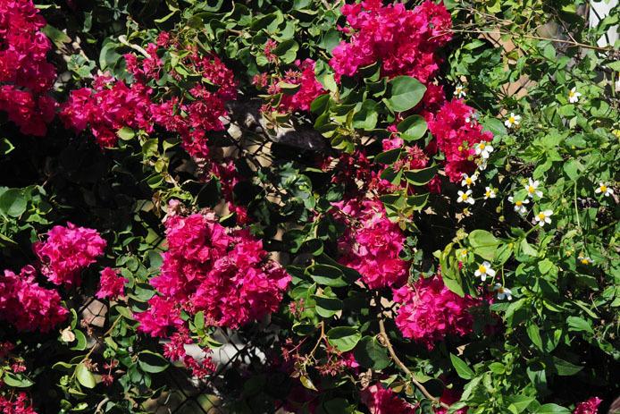 墾丁の植物 -Ⅱ_d0149245_18530618.jpg