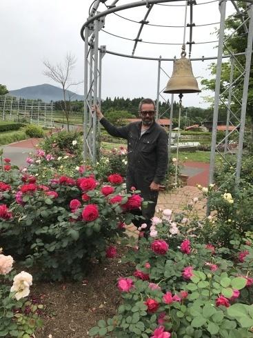 薔薇の季節ですネ---薔薇のイベント2つご案内_b0137969_06231020.jpg
