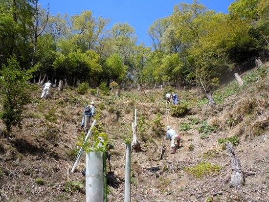 新緑に包まれながらクヌギ苗を植える_b0102572_2164443.jpg
