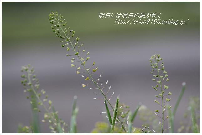 f0361079_20374932.jpg