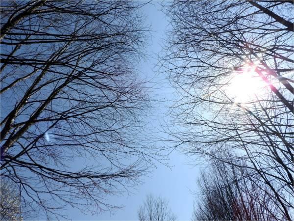 今週末の天気と気温(2018年4月20日)_b0174425_10203533.jpg