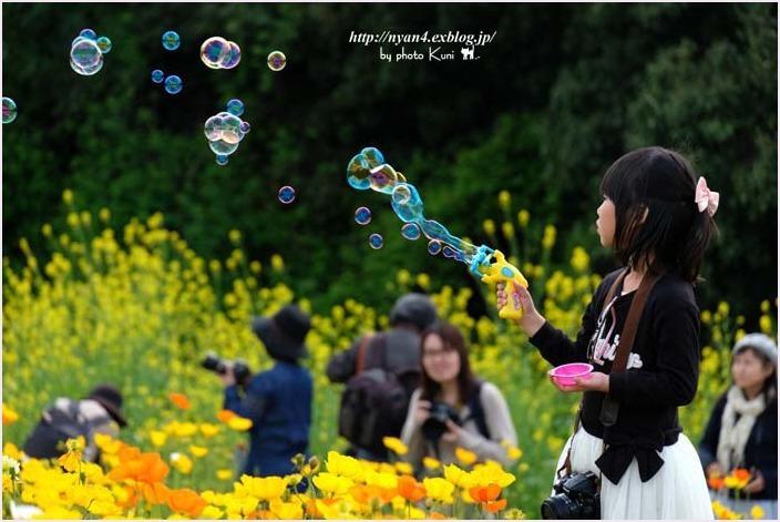 ポピーの丘(大阪万博記念公園)_f0166234_00303230.jpg