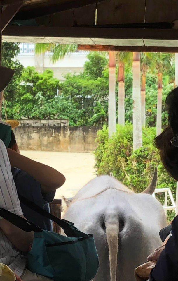 竹富島観光  水牛車でのんびり観光_c0011649_04274662.jpg
