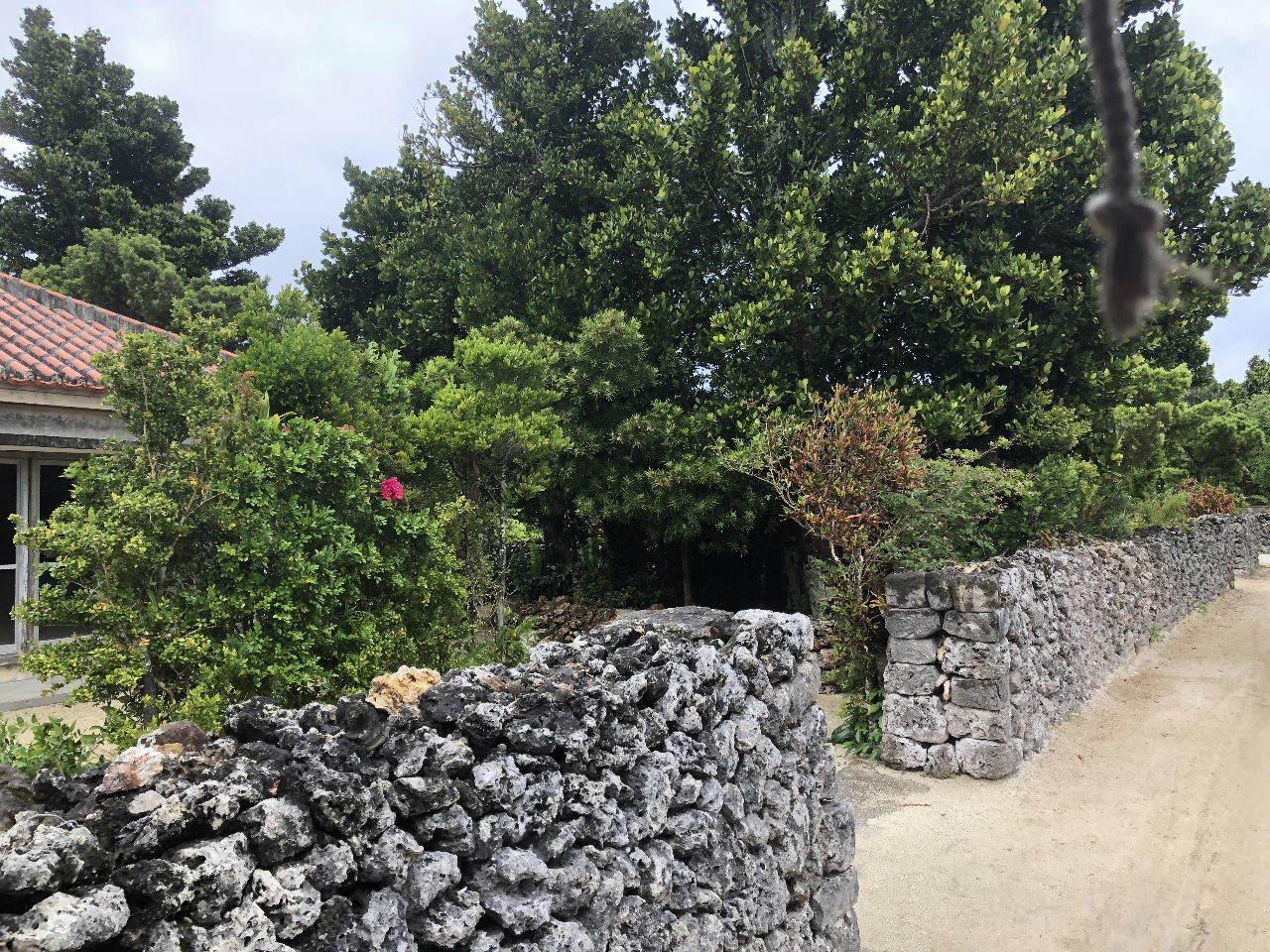 竹富島観光  水牛車でのんびり観光_c0011649_04331347.jpg