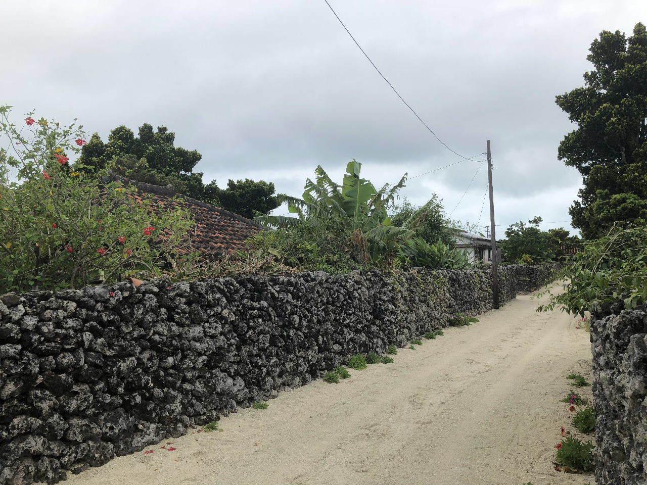 竹富島観光  水牛車でのんびり観光_c0011649_04354661.jpg