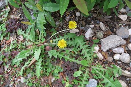 昨日はヤマボウシ、今日は草花です_e0292172_17470918.jpg