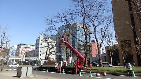 札幌の春のお化粧です。_f0362073_10450633.jpg