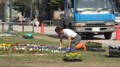 札幌の春のお化粧です。_f0362073_10474428.jpg