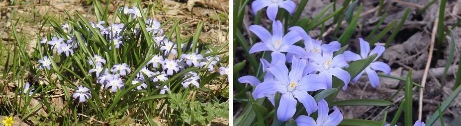 札幌の春のお化粧です。_f0362073_10492891.jpg