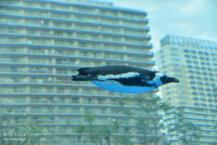 空飛ぶペンギン_d0342382_21071516.jpg