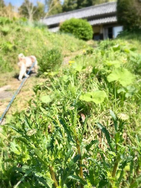 新緑真っ盛り_c0165589_19231534.jpg
