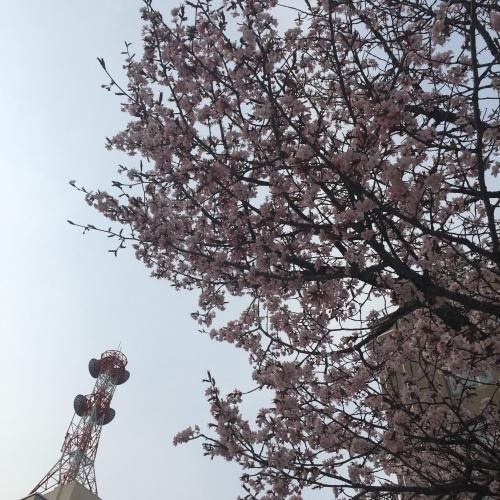 ピンク色の花 いろいろと揃ってます_a0134394_07481043.jpeg