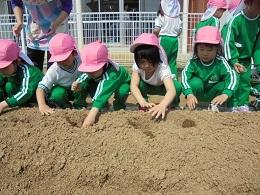 すみれ組 ジャガイモの苗植え_c0212598_14114292.jpg