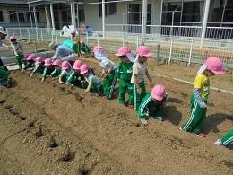 すみれ組 ジャガイモの苗植え_c0212598_14120078.jpg