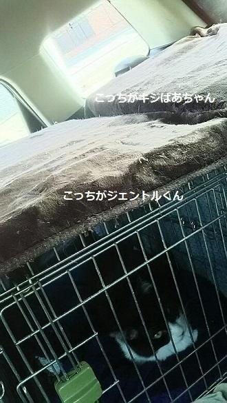 ジャントルくんとキジばあちゃん 新生活スタート!_f0242002_11540271.jpg