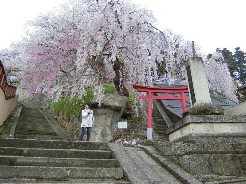 4月21日(土)東北の桜_d0278912_23593683.jpg