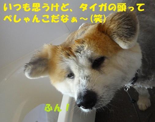 f0121712_23253050.jpg