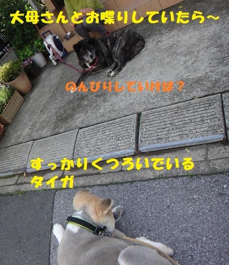 f0121712_23581598.jpg