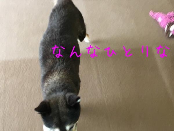 f0369014_10433407.jpg