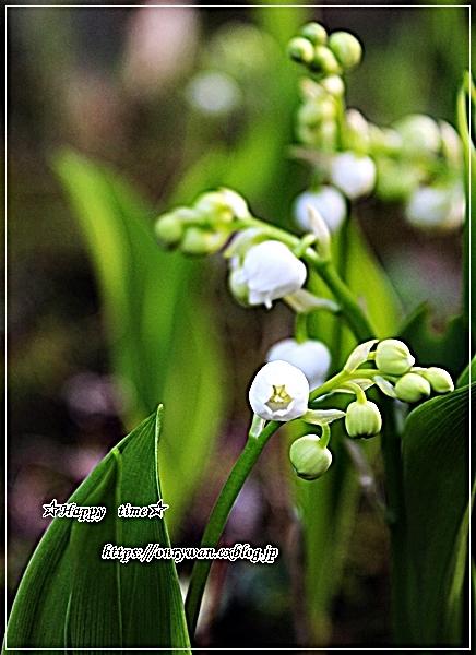 生姜焼き弁当と庭から、つぼみ♪_f0348032_18250288.jpg