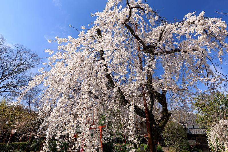 桜咲く京都2018 長建寺のしだれ桜_f0155048_010912.jpg