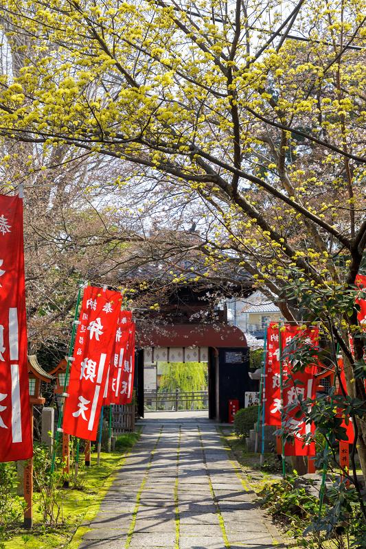 桜咲く京都2018 長建寺のしだれ桜_f0155048_011253.jpg