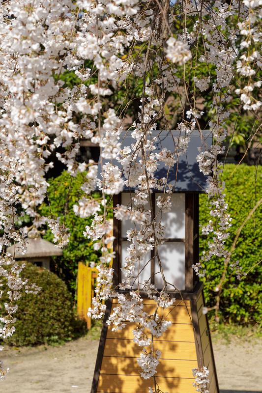桜咲く京都2018 長建寺のしだれ桜_f0155048_0121263.jpg
