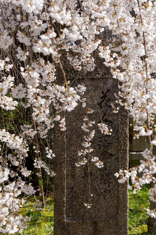 桜咲く京都2018 長建寺のしだれ桜_f0155048_0122043.jpg