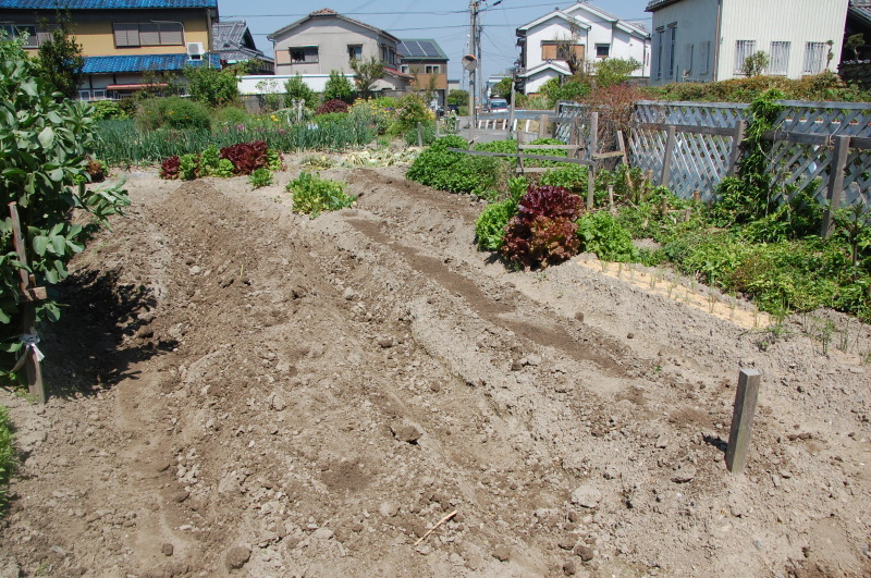 夏野菜植え付けが終った・・・我が家の菜園_c0108460_18124199.jpg