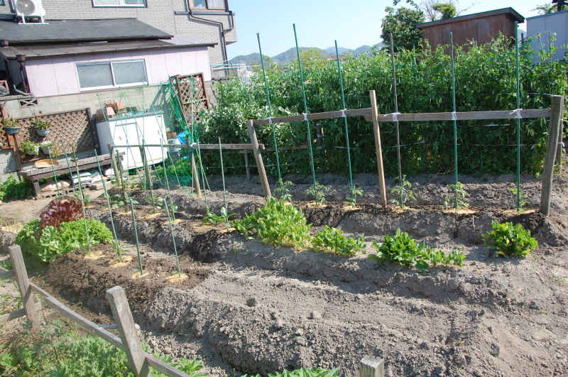 夏野菜植え付けが終った・・・我が家の菜園_c0108460_18125638.jpg