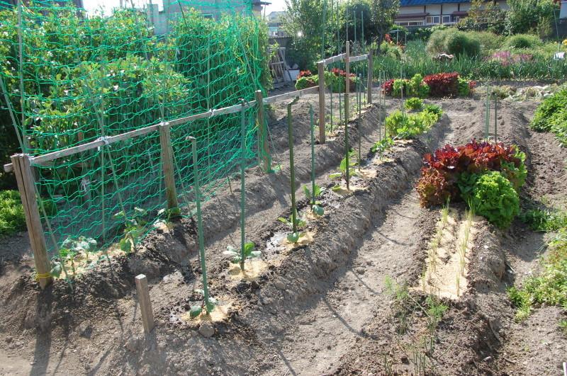 夏野菜植え付けが終った・・・我が家の菜園_c0108460_18125750.jpg