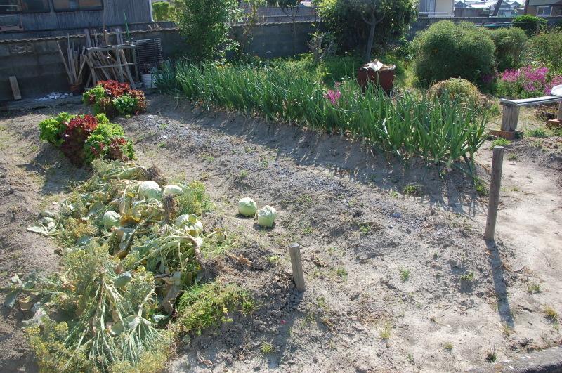 夏野菜植え付けが終った・・・我が家の菜園_c0108460_18134635.jpg