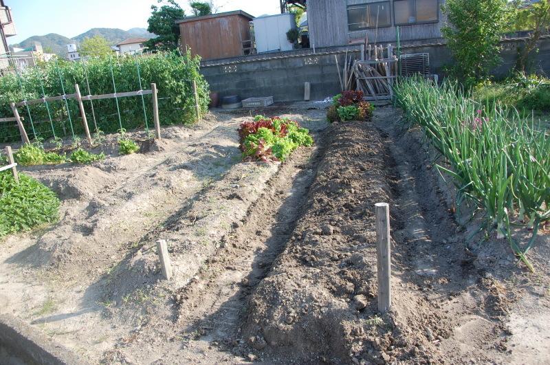 夏野菜植え付けが終った・・・我が家の菜園_c0108460_18134764.jpg