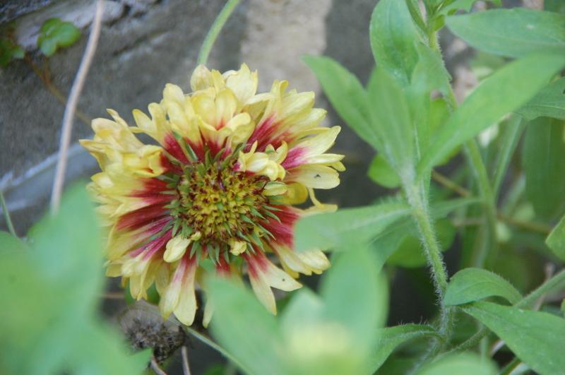 夏野菜植え付けが終った・・・我が家の菜園_c0108460_18162751.jpg