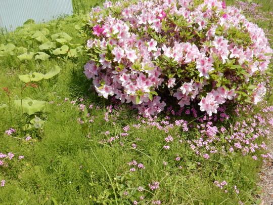 '18,4,21(土)お花畑のような田舎道!_f0060461_09053367.jpg