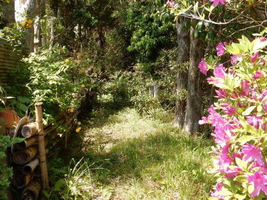 '18,4,21(土)お花畑のような田舎道!_f0060461_09063151.jpg