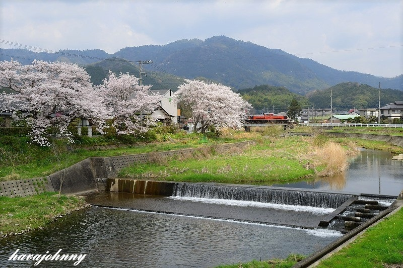 赤と桜_c0173762_20352378.jpg