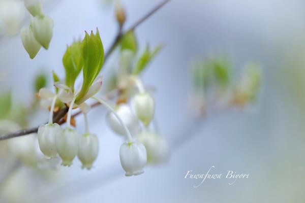 春爛漫 **_d0344864_23541521.jpg